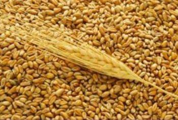 Ценовые рекорды на рынках зерна и муки
