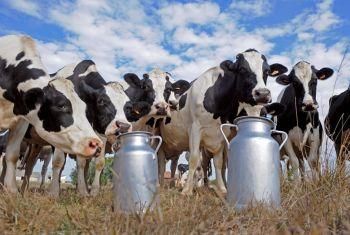 Минсельхоз РБ: в республике с начала года надоено 220 килограммов молока от коровы