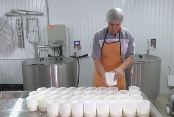 Давлекановский сельхозкооператив начинает массовое производство ремесленных сыров