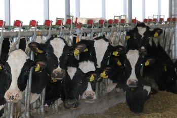 Производство товарного молока в Башкортостане выросло на 10 тысяч тонн