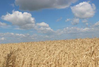 Дмитрий Патрушев: серьезных опасений за урожай зерна в России в 2020 году нет
