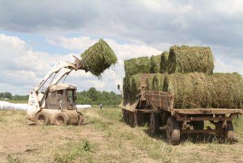Три района республики завершили заготовку сена
