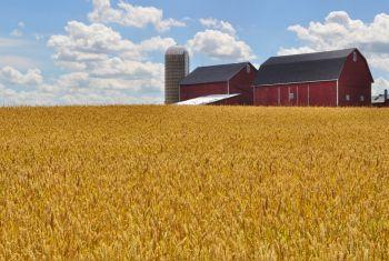 Россельхозбанк сократил сроки выдачи фермерских займов