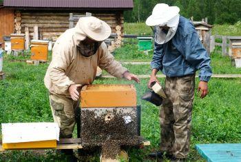 Пчеловоды республики готовятся к отправке башкирского мёда на экспорт
