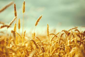 В республике отпразднуют День работника сельского хозяйства и перерабатывающей промышленности