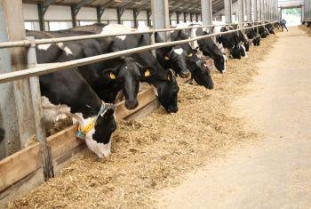 Производство товарного молока в Башкортостане выросло на 21 тысячу тонн