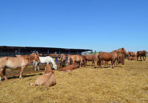 Башкирия в 2019 г направит на развитие коневодства более 100 млн руб
