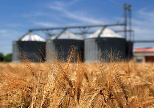 Аграрии Башкирии рассчитывают на развитие на Ишимбайской ОЭЗ переработки зерна, овощей и мяса