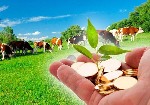 Фермерам и сельхозкооперативам Башкортостана утвердили порядок выделения грантов и субсидий