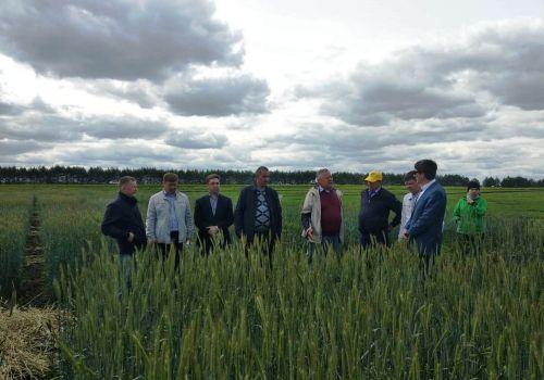 Летняя «сессия» ученых-агрономов Башкирского ГАУ сдана успешно
