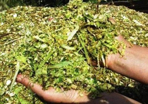 Разработки ученых БНИИСХ по кормозаготовке, востребованы аграриями