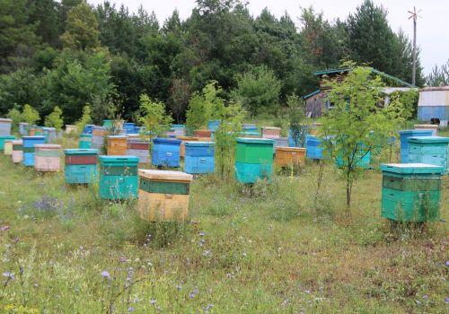 В Башкортостане на проекты начинающих фермеров направили более 154 млн рублей