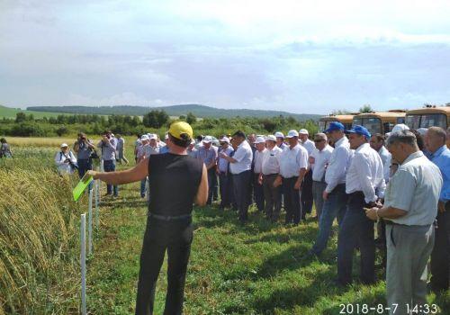 День поля в Кигинском районе: Для каждого агрария важно, чтобы культура вовремя созревала и приносила хороший доход