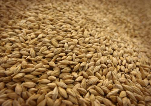 Аналитики прогнозируют рекордный экспорт российской пшеницы в новом сезоне