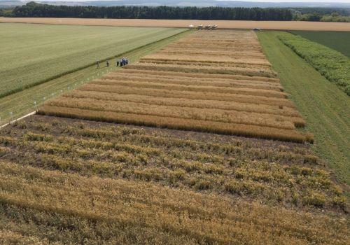 Глава республики Радий Хабиров провёл «Сельский час» по вопросам селекции и семеноводства