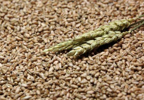 Минсельхоз России с 2022 года запустит систему прослеживаемости зерна