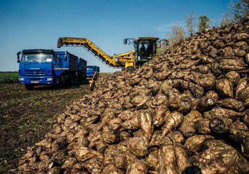 Аграрии республики накопали более 810 тыс. тонн сахарной свеклы