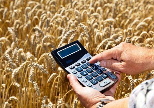 Российский зерновой рынок: некоторые культуры начали дешеветь